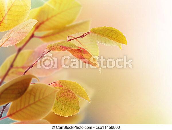 Autumn Leaves - csp11458800