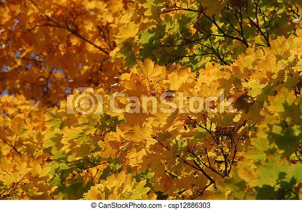 Autumn leaves - csp12886303