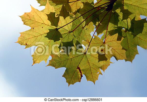 Autumn leaves - csp12886601