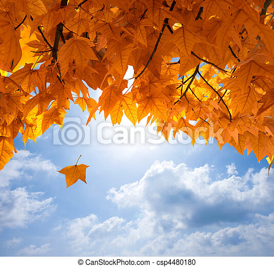 Autumn leaves - csp4480180