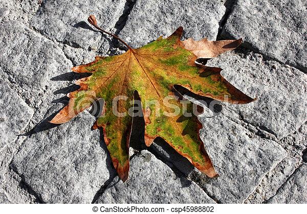 Autumn leaves - csp45988802