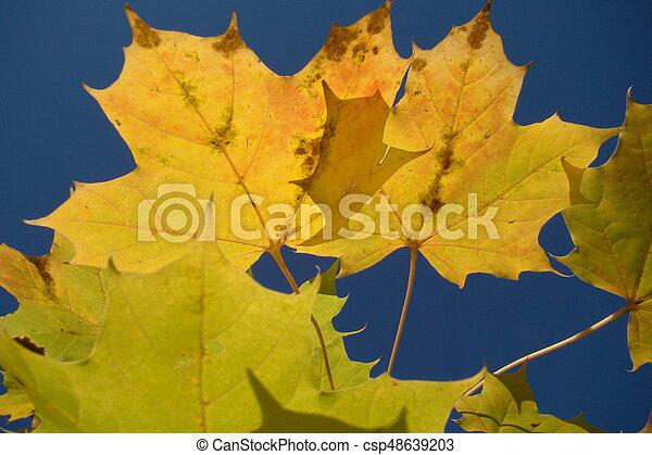 Autumn Leaves - csp48639203