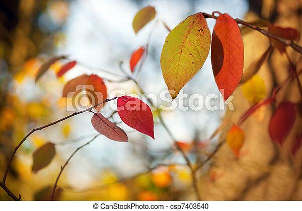 Autumn leaves - csp7403540