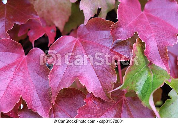 Autumn leaves - csp81578801