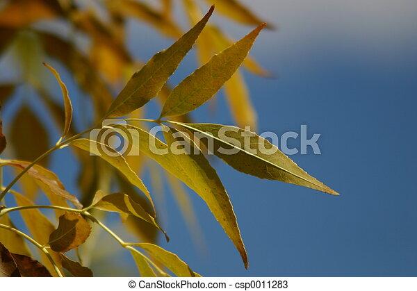 Autumn Leaves - csp0011283