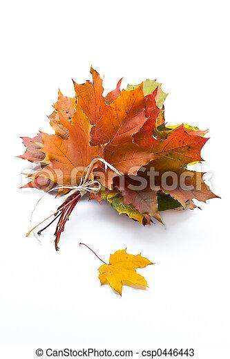 Autumn leaves - csp0446443
