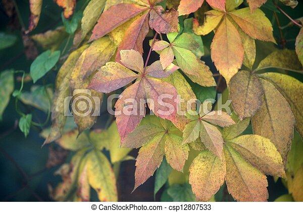Autumn leaves - csp12807533
