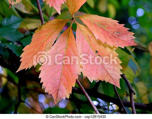 Autumn leaves - csp12815430