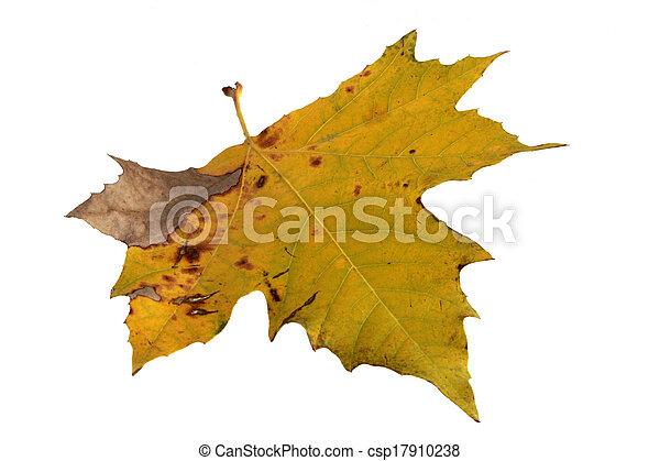 autumn leaves - csp17910238