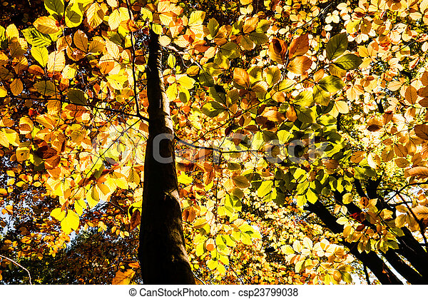 autumn leaves - csp23799038