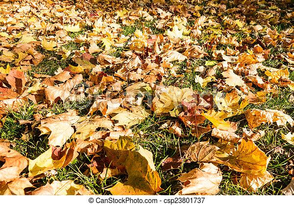 autumn leaves - csp23801737