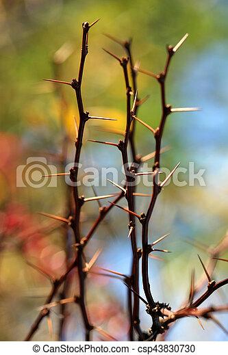 autumn leaves - csp43830730