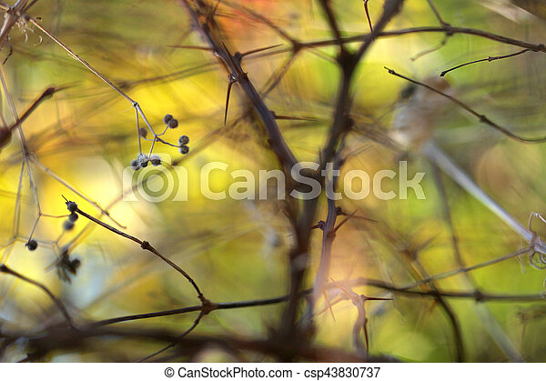 autumn leaves - csp43830737