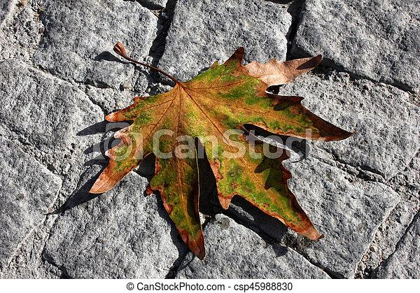 Autumn leaves - csp45988830