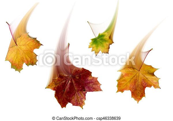 autumn leaves - csp46338639