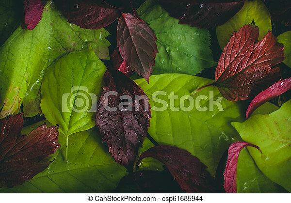 autumn leaves texture - csp61685944