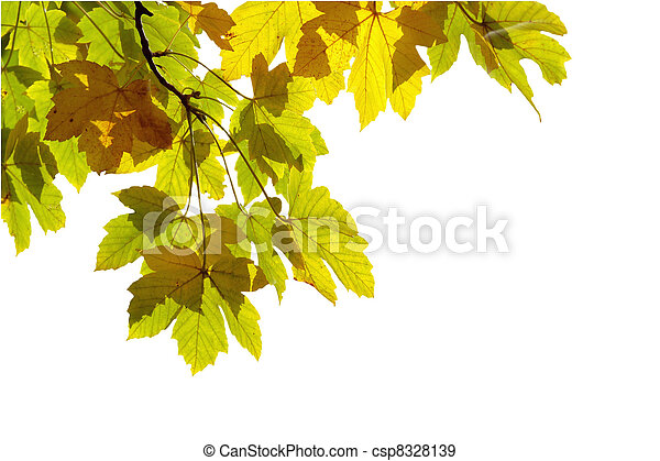 Autumn leaves, very shallow focus on white background - csp8328139