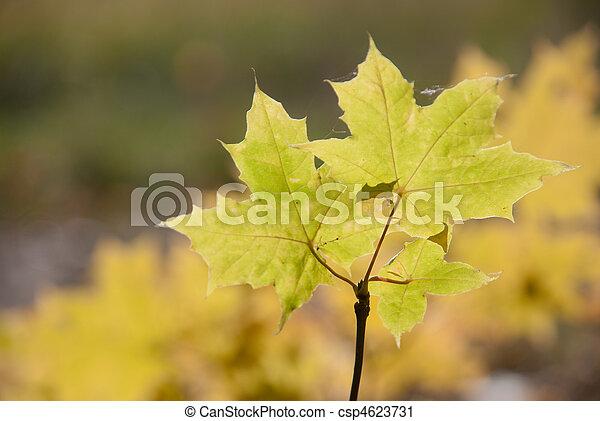 Autumn leaves , very shallow focus. - csp4623731