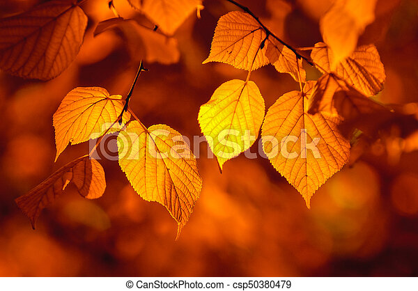 autumn leaves, very shallow focus - csp50380479