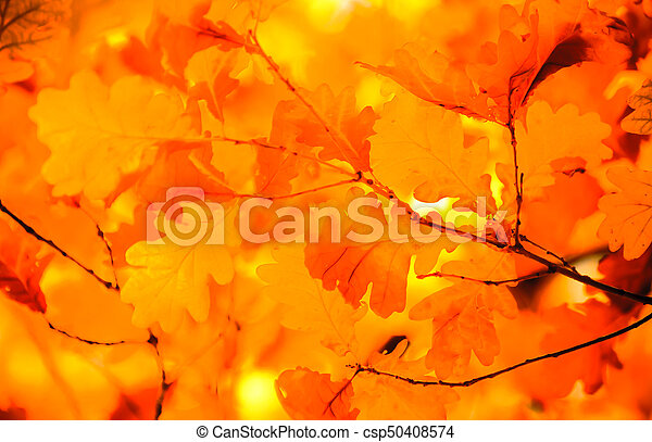 autumn leaves, very shallow focus - csp50408574
