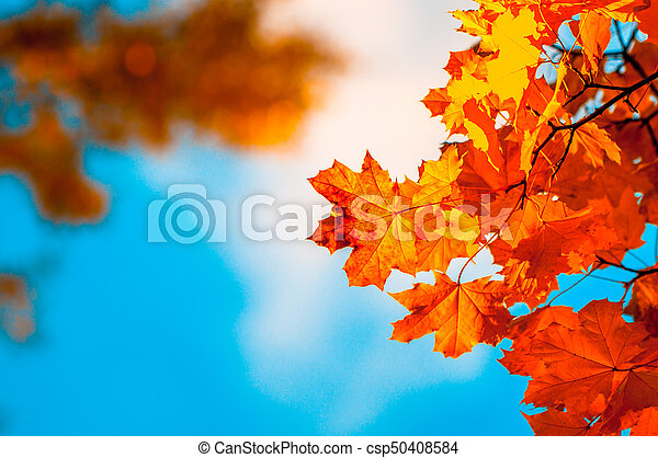 autumn leaves, very shallow focus - csp50408584