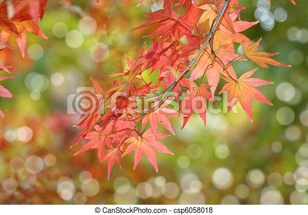 autumn leaves, very shallow focus  - csp6058018