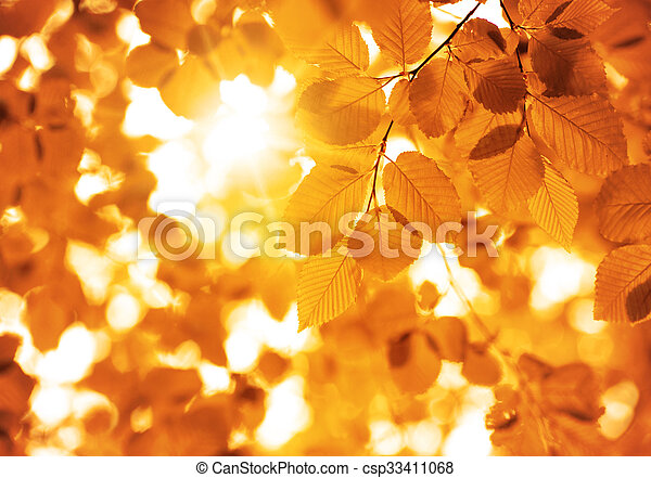 autumn leaves, very shallow focus - csp33411068