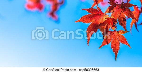 autumn leaves, very shallow focus - csp50305663