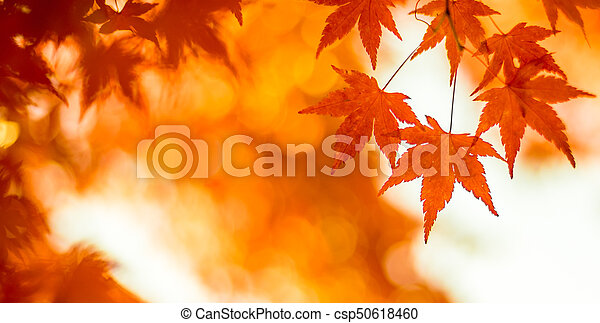 autumn leaves, very shallow focus - csp50618460