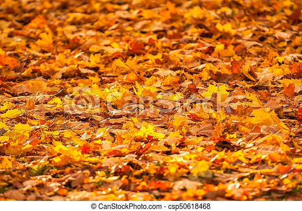 autumn leaves, very shallow focus - csp50618468