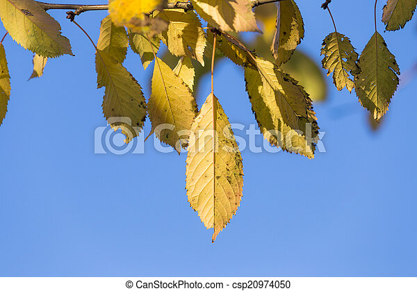 autumn leaves, very shallow focus  - csp20974050