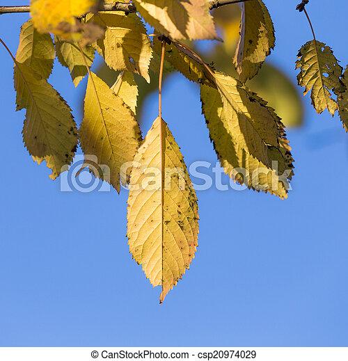 autumn leaves, very shallow focus  - csp20974029
