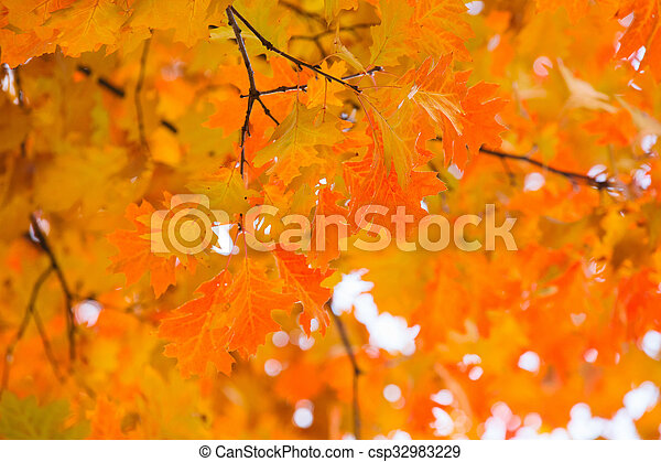 autumn leaves, very shallow focus - csp32983229