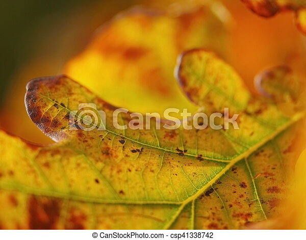 autumn leaves, very shallow focus - csp41338742