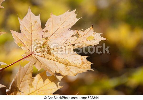 Autumn leaves , very shallow focus. - csp4623344