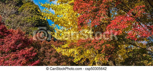 autumn leaves, very shallow focus - csp50305642