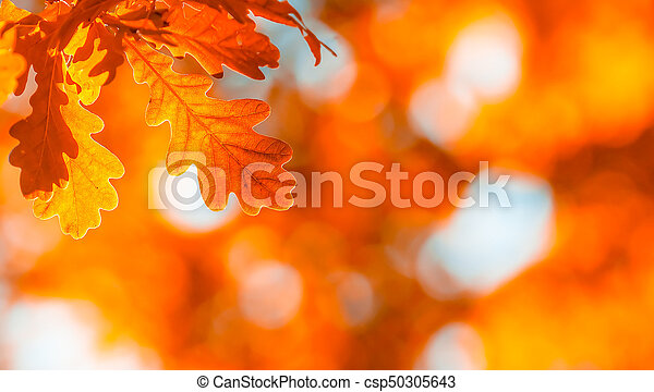 autumn leaves, very shallow focus - csp50305643