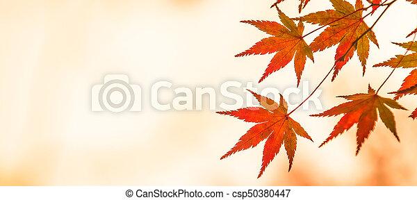 autumn leaves, very shallow focus - csp50380447