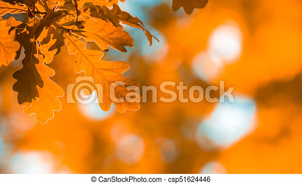 autumn leaves, very shallow focus - csp51624446