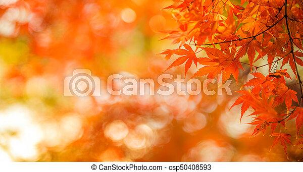 autumn leaves, very shallow focus - csp50408593