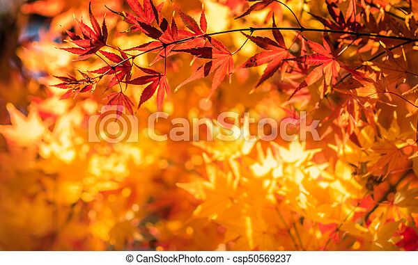 autumn leaves, very shallow focus - csp50569237