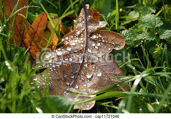 autumn leaves with drops of morning dew - csp11721046