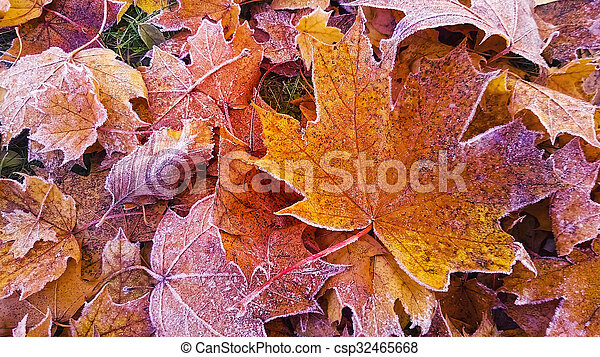 autumn leaves with frost - csp32465668