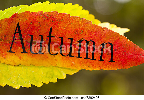 autumn leaves with letters - csp7392498