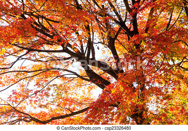 Autumn Leaves with Sunlight - csp23326480