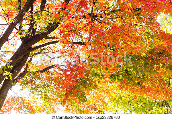 Autumn Leaves with Sunlight - csp23326780