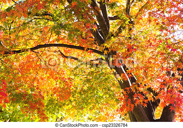 Autumn Leaves with Sunlight - csp23326784