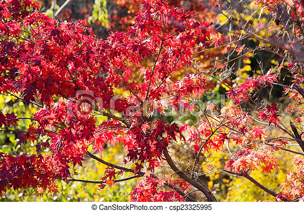Autumn Leaves with Sunlight - csp23325995