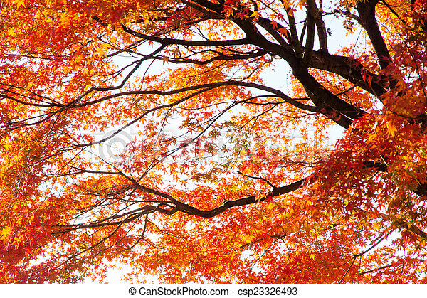 Autumn Leaves with Sunlight - csp23326493