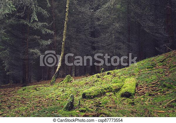 autumn les, poleno, mech, clearing, pokrytý - csp87773554